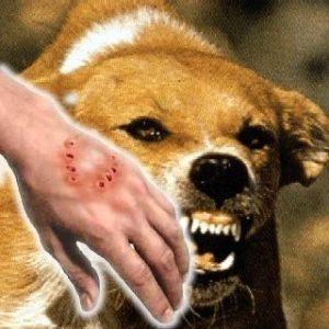 rabies prevention in Marikina City